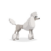 French white poodle cartoon illustration. Comic dog character. Pet animal isolated on white background. EPS10 + JPEG preview.