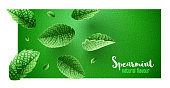 Fresh green mint leaves on banner design with copyspace. Main natural organic ingredient for refreshing drinks like lemonade or mojito. Realistic falling leaves of spearmint. EPS10 vector