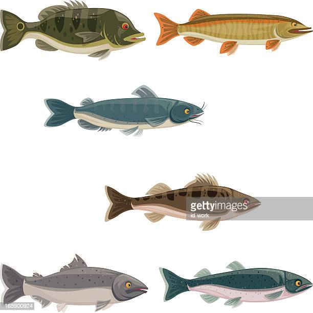 Freshwater fish stock illustrations and cartoons getty for Freshwater fishing games