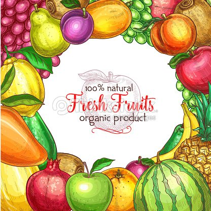 Fruit frame sketch poster for food, drink design