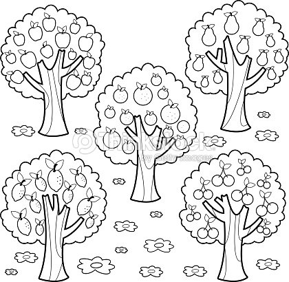 Fruit Trees Black And White Coloring Book Page stock