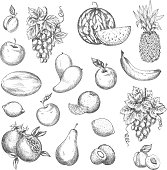 Fruits sketch. Vector isolated icons of melon and watermelon, tropical pineapple and kiwi. Sketched juicy grape bunch, apricot, pomegranate, pear and apple. Fresh lemon, banana