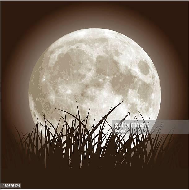 Pleine lune et herbe