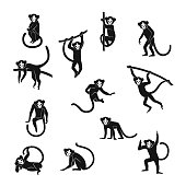 Vector set isolated black monkey silhouettes  in different stance. Symbols of 2016 Chinese New Year.