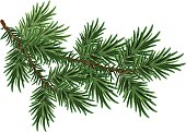 Fur-tree branch. Green fluffy pine branch. Isolated on white vector illustration