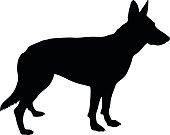Vector silhouette of a purebred German Shepherd