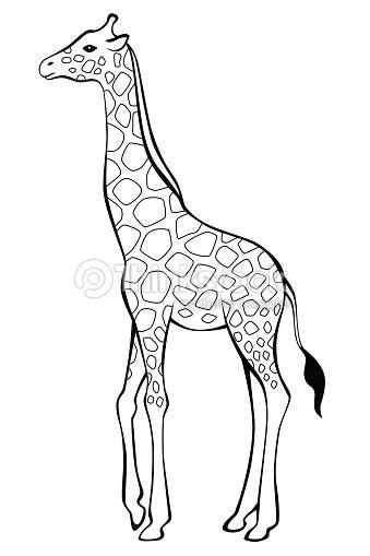 Giraffe Black White Isolated Illustration Vector Vector Art Thinkstock