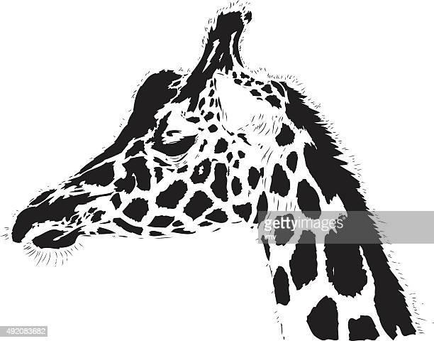 Giraffe illustration in black lines