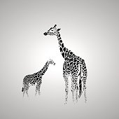 Vector silhouette of  giraffe with her baby.