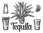Glass and botlle of tequila. Cactus, salt and lime  Hand drawn sketch set of alcoholic cocktails. Vector illustration