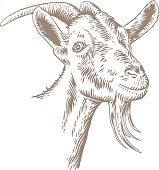 Drawing of isolated white goat head with horns on the white