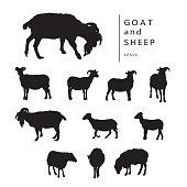 Set of vector illustrations of horned farm animal.