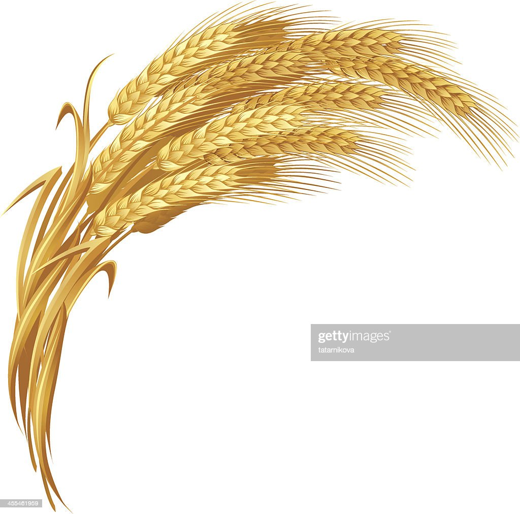 Gold Wheat Vector Art | Getty Images