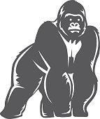 gorilla stand gray