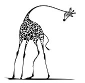 Graceful giraffe with long thin feet, vector