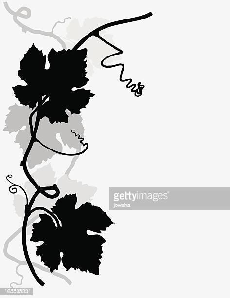 Illustrations et dessins anim s de feuille de vigne getty images - Feuille de vigne dessin ...