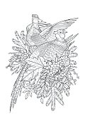 Graphic art with two pheasants, pine and currant branches drawn in line art style. Vector design isolated on white background. Coloring book page design for adults and kids