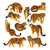 Graphic collection of tigers in different poses. Vector exotic design elements isolated on white background