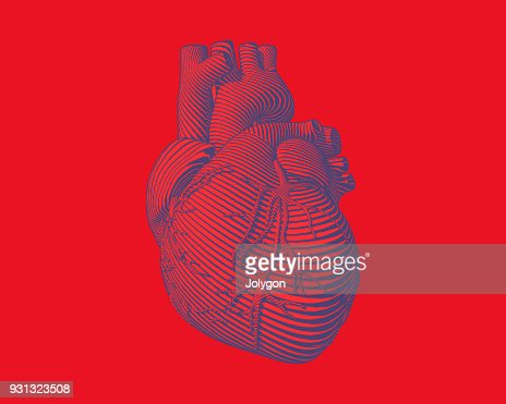 Graphic stylized human heart illustration : arte vettoriale