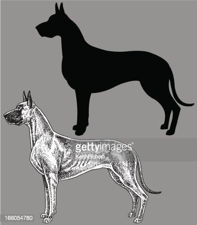 Great Dane - Dog, domestic pet : Vector Art