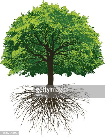 Oak Tree With Roots Great Oak Roots Vector...