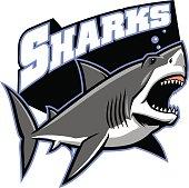 vector of great white shark mascot