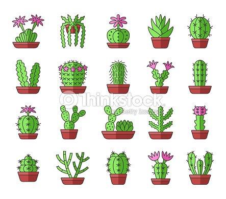 Green cactuses with pink flowers desert plants for terrariums and green cactuses with pink flowers desert plants for terrariums and rock gardens cartoon icon mightylinksfo