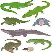 Green crocodile and alligator reptile wild animals vector illustration collection cartoon style. Cartoon green crocodile reptile cartoon vector illustration