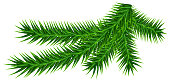 Green fir branch isolated on white. Christmas vector illustration
