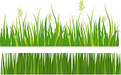 Green grass border plant lawn nature meadow ecology summer gardening vector illustration. Environment turf herb lush natural foliage growth.