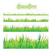 Green grass of different heights. Realistic vector illustration on white background