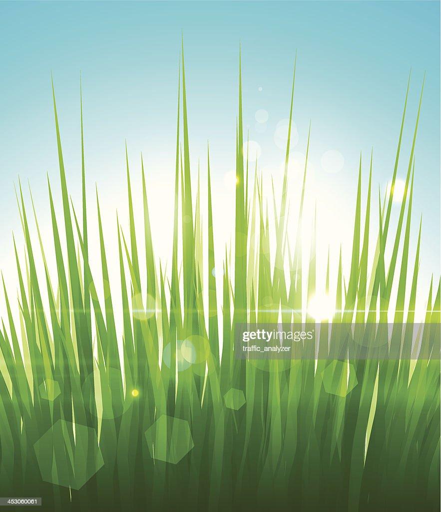 Green grass : Vector Art