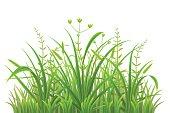 Green grass pattern on white background