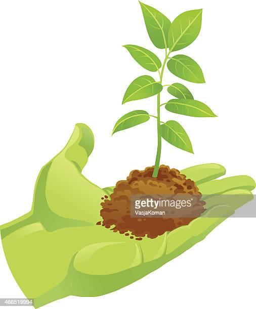 Mains tenant une terre verte avec petite Jeune pousse