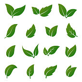 Green leaf vector icons. Spring leaves ecology symbols. Green leaf and spring nature organic illustration