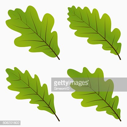 Green Oak Leaves Vector Art | Thinkstock