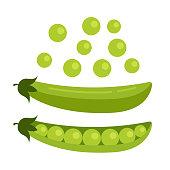 Green open pea seed. Fresh fruits concept. Vector flat cartoon design graphic illustration