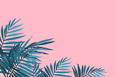 Green palm fronds isolated on a pink background. Tropical leaves trendy background. Vector illustration