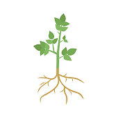 Green plant sprout with roots , isolated on white background. Vector illustration