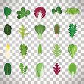 Green salad leaves. Vector vegetarian healthy food leaf set isolated on transparent background