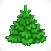 Green spruce isolated on a white background