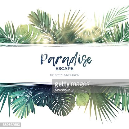 Green summer tropical background with exotic palm leaves and plants. Vector floral background : stock vector