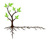 A logo of green tree with root system.