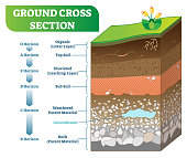 Ground Cross Section vector illustration with organic, topsoil, subsoil and other horizon levels. Geological information poster.