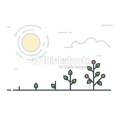 Growing line tomatos : stock vector