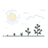 Growing plant stages. Seeds, sprout and grow plant. Vegetable tomatoes or red fruits or flowers. Line style flat illustration of garden plant with leaves. Thin lines. Grow process.
