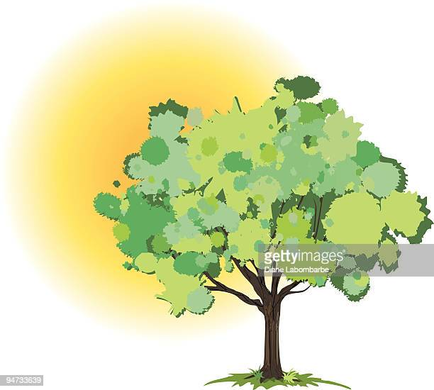 Grunge Tree in the Sun