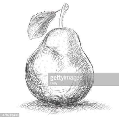 hand drawing pear vector art thinkstock