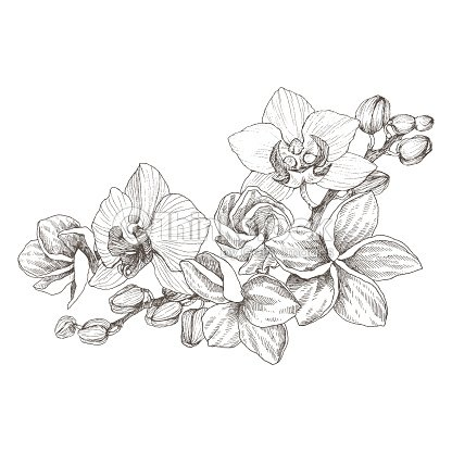 0b0703f31 Hand drawn black outline bouquet with orchid and plumeria on a white  background isolated. Highly detailed vector illustration. Beautiful exotic  flower.