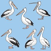Vector image of the different funny pelicans.